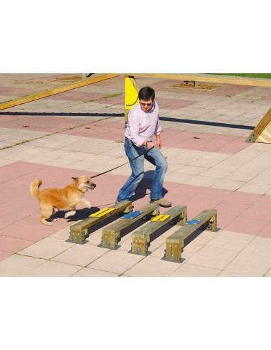 Saut en longueur pour parcours canin